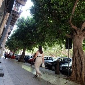 """Palermo, allarme da piazza Sant'Oliva: """"Potate gli alberi"""""""