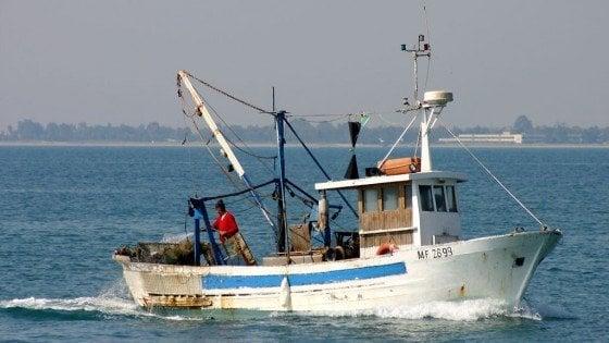 Palermo, sequestrati 7 quintali di pesce spada